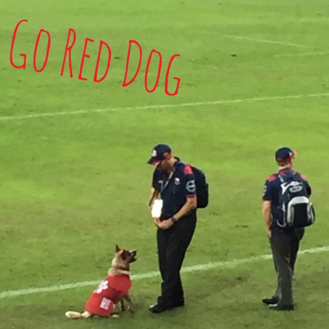 red dog IMG_1698